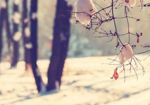 304 bienvenido-invierno